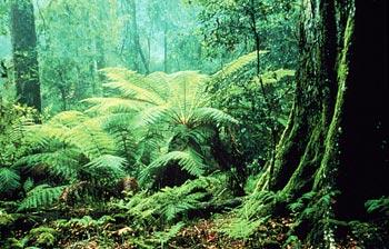 Keragaman Flora di Indonesia